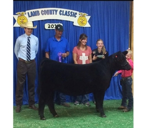 Grand Champion Heifer 2014 Lamb County Classic Shown by Hanna Gruhlkey